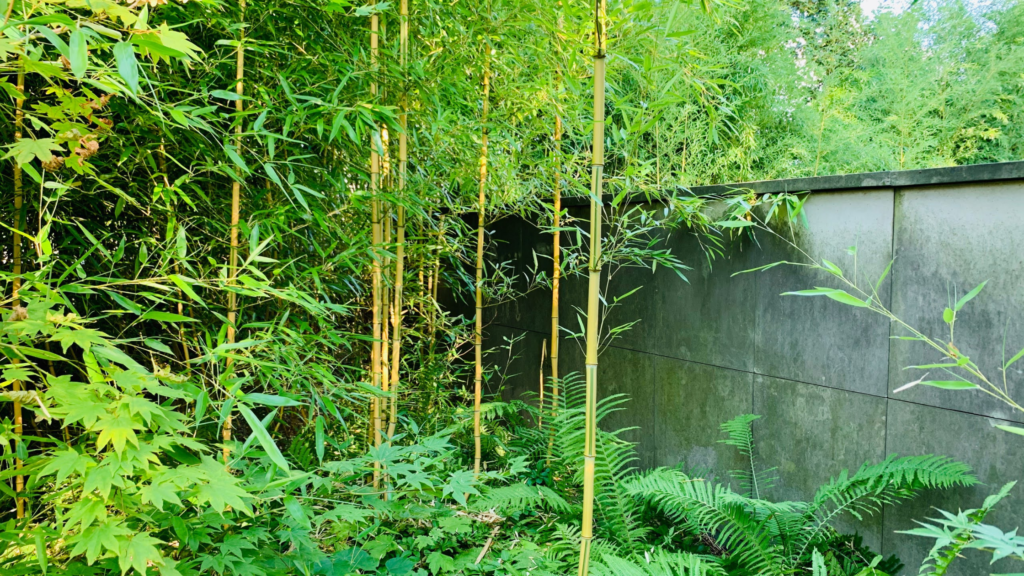 projektowanie bambusów w ogrodzie