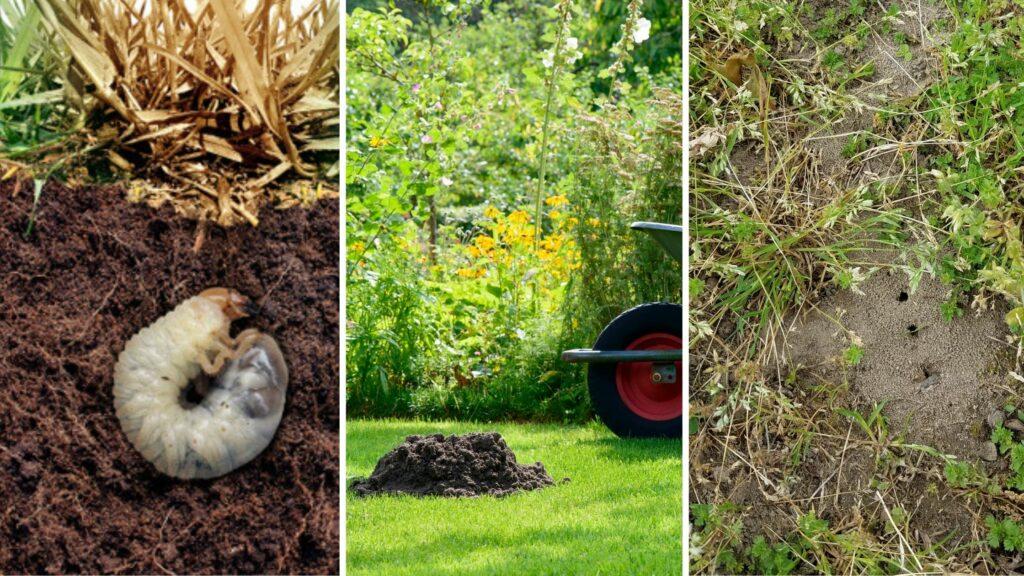 projektowanie ipielęgnacja trawnika